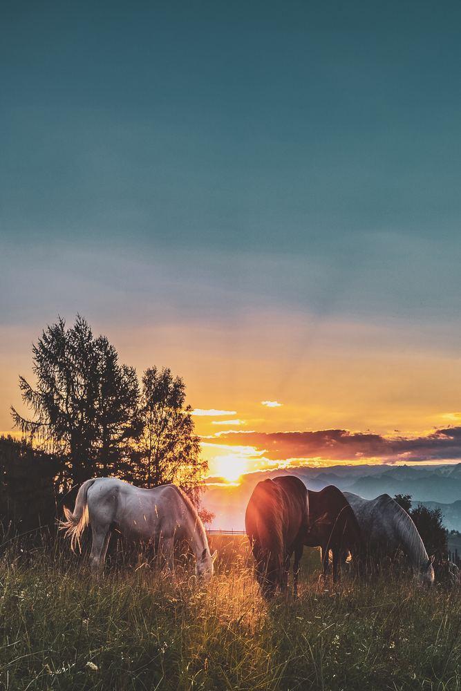 Harmoni på hästryggen